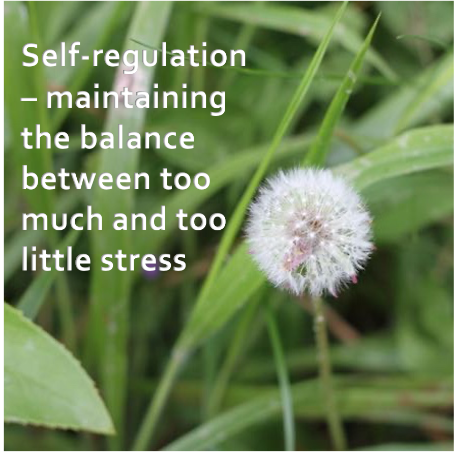 LifeForward Resilience self regulation